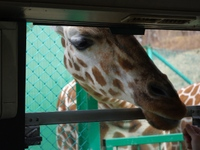 Iwate_safari_2_2